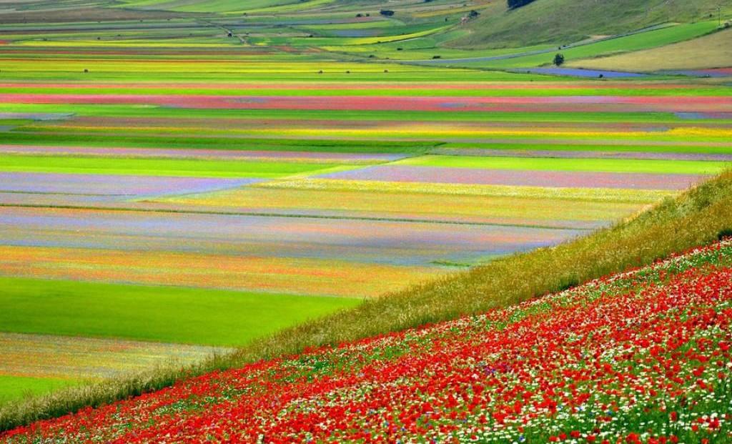 fioritura-castelluccio-di-norcia