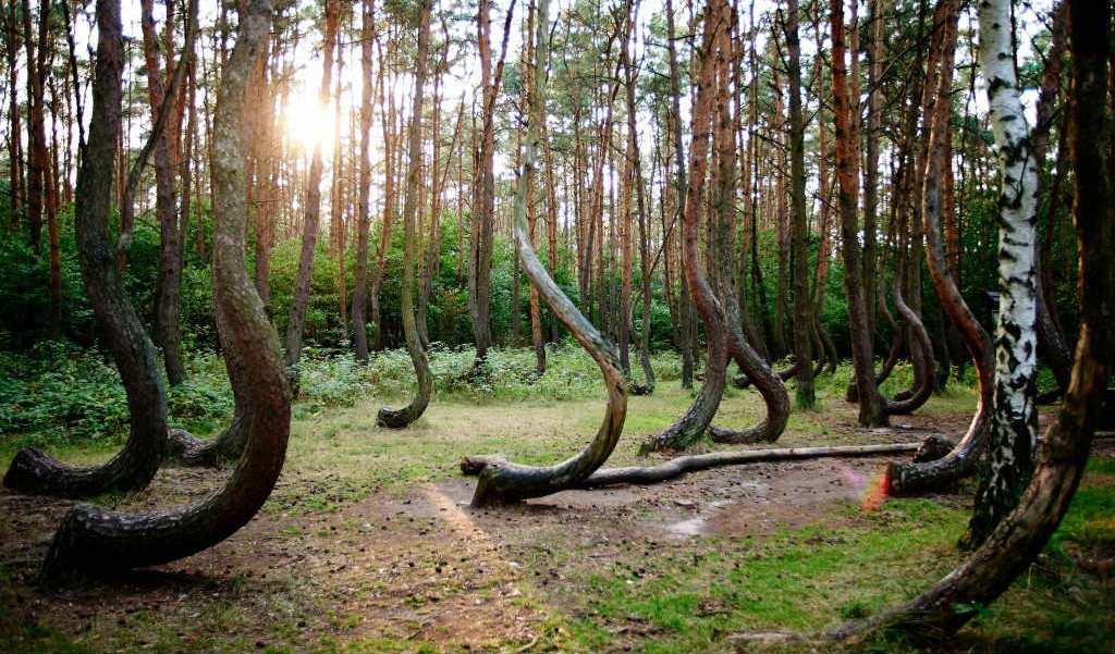 foresta-di-hoia-baciu-romania